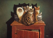 Domestic Cats on a cabinet