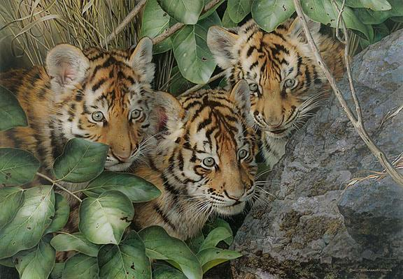 Nice tiger cub painting by Carl Brenders, Hide and Seek